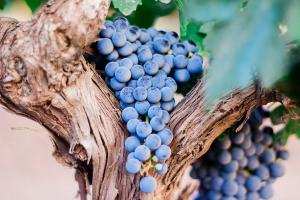 Wijnen Vansteenkiste